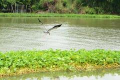 Oiseau et gloire de matin Image libre de droits