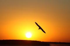 Oiseau et le soleil Photographie stock