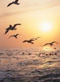 Oiseau et mer Photo libre de droits