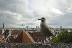 Oiseau et nuages Photo stock