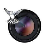 Oiseau et objectif de caméra sur le blanc Images stock