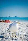 Oiseau et plage Photographie stock