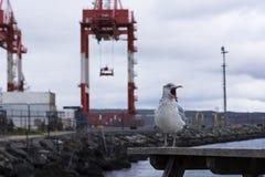 Oiseau et port fâchés images stock