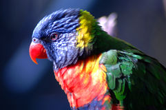 Oiseau exotique 4 Photographie stock