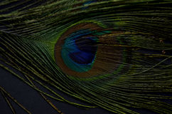 Oiseau exotique Illustration de Vecteur
