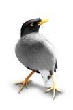 Oiseau exotique d'isolement à l'arrière-plan blanc photographie stock