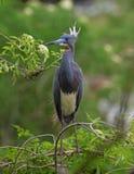 Oiseau exotique photo libre de droits