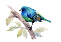 Oiseau exotique sur la branche d'arbre sur le fond blanc, illustration d'aquarelle Photographie stock libre de droits