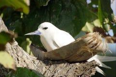 Oiseau exotique sur le nestl fermé Photographie stock libre de droits