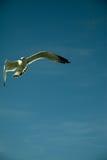 Oiseau, faune Photos libres de droits