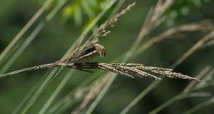 Oiseau fol Images stock