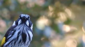 Oiseau fol Image libre de droits