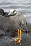 Oiseau, Galapagos Photos stock