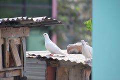 oiseau gentil Images libres de droits