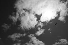 Oiseau glissant dans le ciel en noir et blanc Photographie stock libre de droits