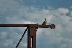 Oiseau gratuit Photo stock
