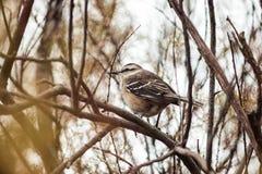 Oiseau gratuit sur le champ Photos stock