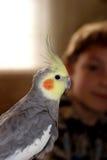 Oiseau grisâtre Image libre de droits