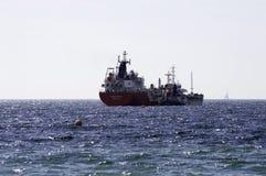 Oiseau heureux de bateau-citerne de LPG avec le bateau-citerne Whitnavigator de produit chimique et de produit Photos stock