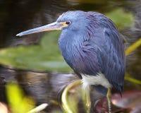 Oiseau humide dans les marais Photographie stock libre de droits