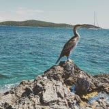 Oiseau impressionnant Photo libre de droits