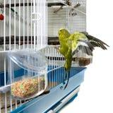 Oiseau jaune canari Photographie stock libre de droits