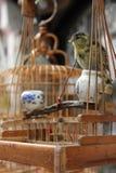 Oiseau jaune canari Photo stock
