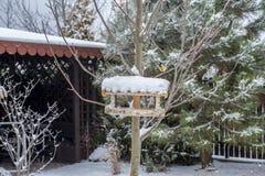 Oiseau jaune de mésange mangeant la graine du conducteur en bois d'oiseau en hiver Images stock