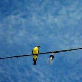 Oiseau jaune sous un ciel bleu Photo libre de droits