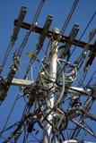 Oiseau jaune sur des lignes électriques Photo stock