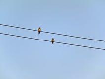 Oiseau jumel Photo stock