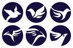 Oiseau Logo Vector Design Photos libres de droits