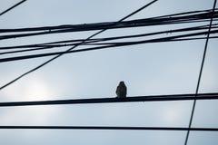Oiseau méfiant Photographie stock