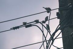 oiseau méfiant - effet de film de vintage Images libres de droits