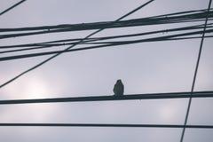 oiseau méfiant - effet de film de vintage Photo stock