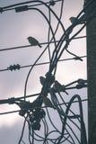 oiseau méfiant - effet de film de vintage Image libre de droits