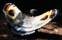 Oiseau. Magnifique oiseau multicolore dans la nature Royalty Free Stock Photo