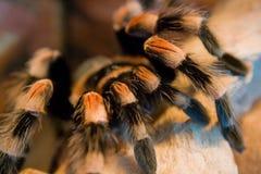 Oiseau mangeant l'araignée Image libre de droits