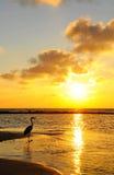 Oiseau marin Photographie stock libre de droits