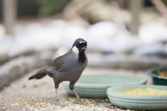 Oiseau mignon Images libres de droits