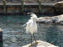 Oiseau mignon de mer blanche Photographie stock