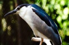 Oiseau mignon et photo pointue d'oiseau Images libres de droits