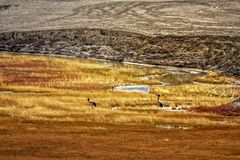 Oiseau migrateur rare dans la TSO mars image libre de droits