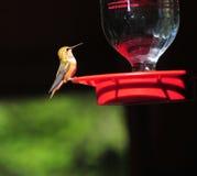 Oiseau minuscule Images libres de droits