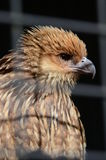 Oiseau mis en cage images stock