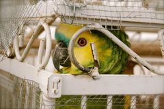 Oiseau mis en cage Photo stock