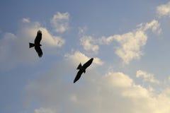 oiseau montant dans le ciel bleu, surveillant photographie stock libre de droits