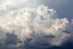 Oiseau montant parmi des nuages photographie stock libre de droits