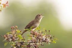 Oiseau montrant dans la forêt Photographie stock libre de droits
