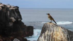 Oiseau moqueur Images stock
